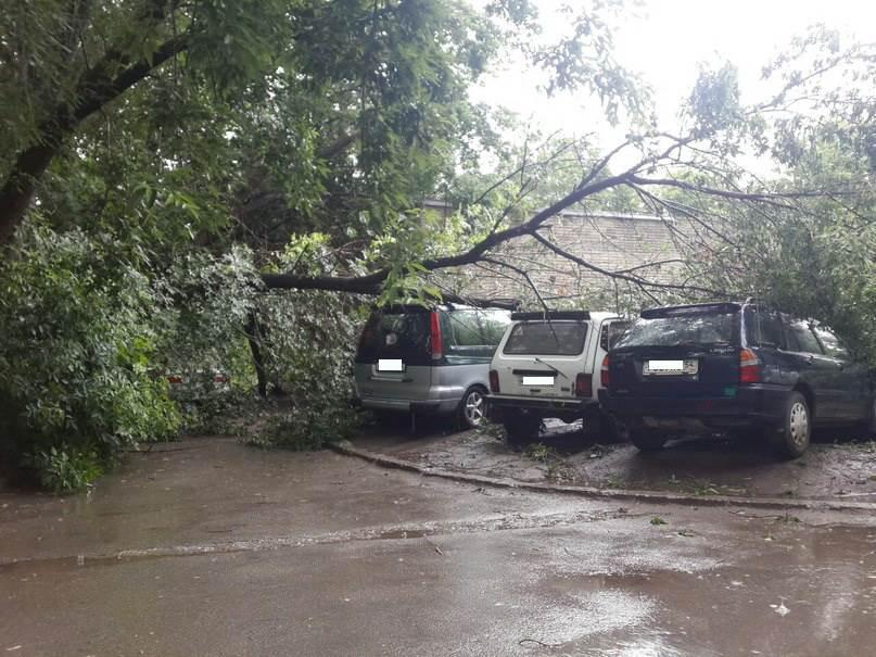 ФОТОФАКТ: Деревья падают на машины во дворах Бердска