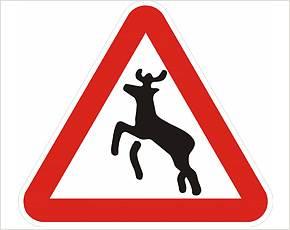 Дорожный знак «Животные на дороге» актуален в Искитимском районе