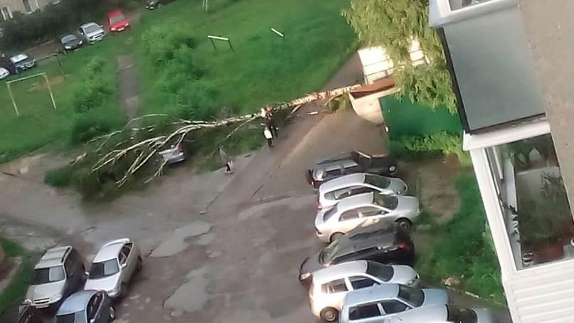 ФОТОФАКТ: Дерево упало на два автомобиля в Бердске