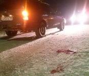 Женщину с собакой сбил автомобиль на пешеходном переходе в Бердске