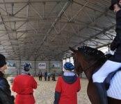 Трагедия в бердском конном клубе. Хронология событий