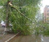 Дерево упало в Микрорайоне Бердска на внутриквартальную дорогу