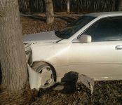 Дама с собачкой и ребёнком улетела в кювет на авто в Бердске и врезалась в дерево