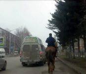 Видеофакт: Одна лошадиная сила на центральной улице Бердска