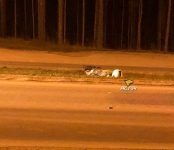 Бердский байкер разбился в ДТП на трассе и скончался от ран в больнице