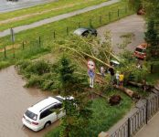 Чьи деревья падают на автомобили в Бердске?