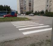 В Бердске обустроили пешеходный переход для… насекомых