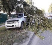 Ветка муниципальной берёзы упала на частный автомобиль в Бердске