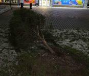 «Гонщик» на «Тойота Витц» уничтожил ёлочку на улице Ленина в Бердске