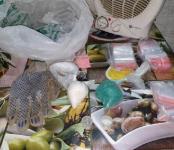 Гараж с кокаином, гашишем и «синтетикой» нашёл наркоконтроль в Бердске