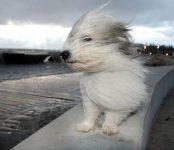 О штормовом ветре предупредили жителей НСО в МЧС