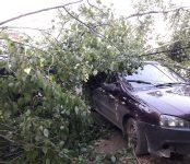 Ураган в Бердске: первый удар обошёлся без пострадавших